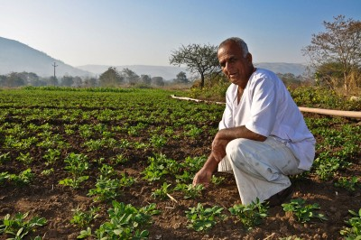 Indian farmer in groundnut farm. Photo credit: ThinkStock